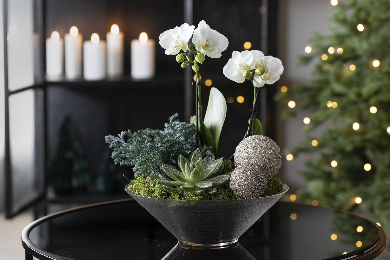 Julegruppe med orkide i glassfat