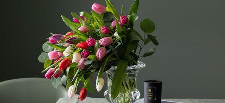 tulipaner i mange farger