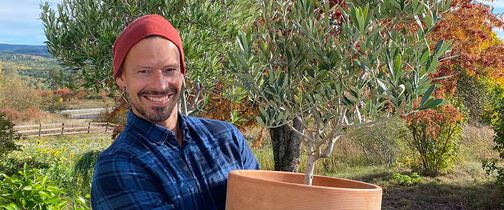 oliventre i miljø