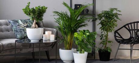 Grønne planter_miljø