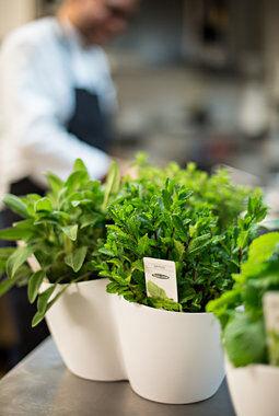 Vi selger 3 pk. med krydderurter, Urtene passer perfekt til ulike pastaretter.