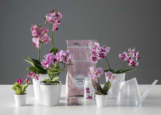 Pleieprodukter orkide, orkidejord, orkidenæring