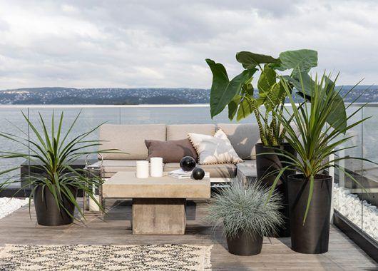 skap en frodig uteplass med prydgress og grønne planter