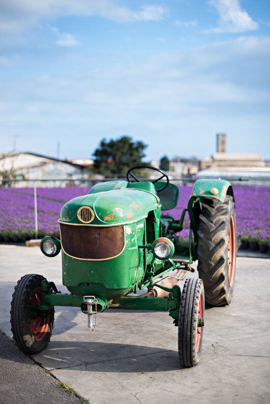 Produksjon av lavendel i Italia