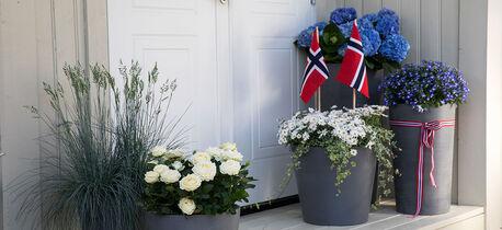 Blomster til 17. mai