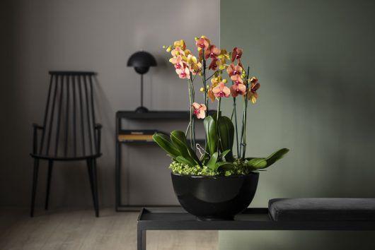 Orkidéer plantet sammen i en sort potte