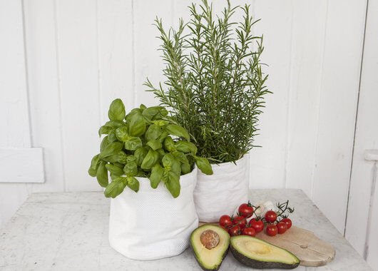 Hvit grow-in med basilikum og rosmarin