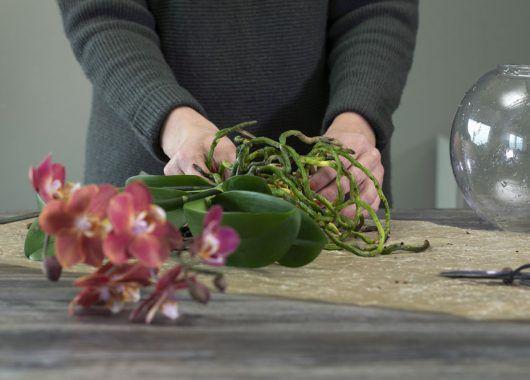 Vask røttene på orkidéen fri for jord og bark