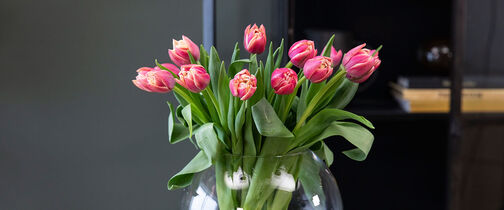 Slik steller du tulipaner