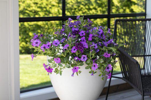 plant sommerblomster i ampel rett i utekrukkene og få en frodige krukke på 1-2-3
