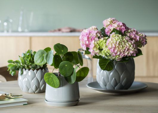 blomsterpotter i grågrønne fargetoner