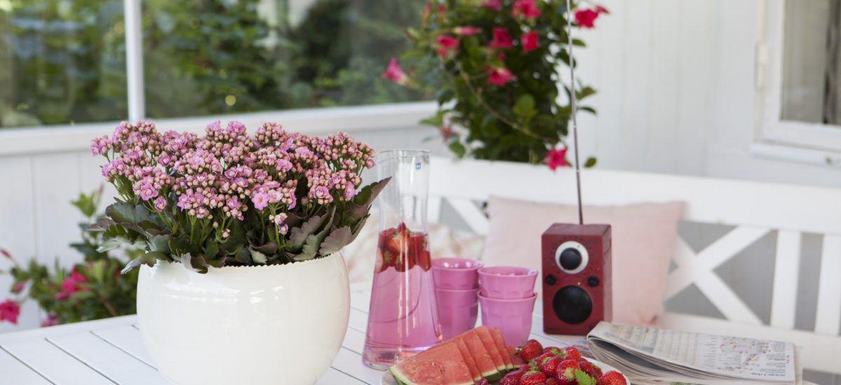 ildtopp er en enkel blomst å lykkes med