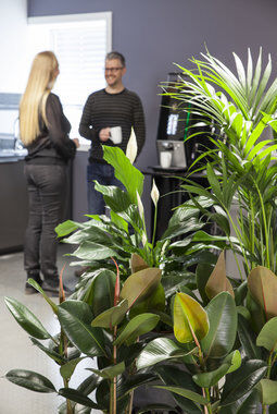 grønne planter skaper trivsel på arbeidsplassen