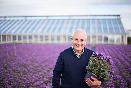 Produsent lavendel italia