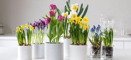 Start våren inne med løkblomster