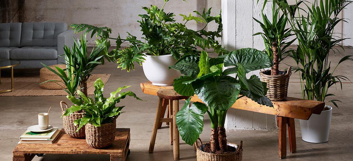 Grønne planter i stuen