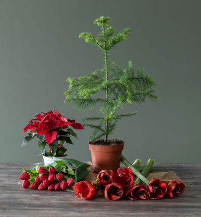 Julens røde favoritter stor pakke
