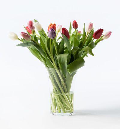 15 tulipaner i miks farger