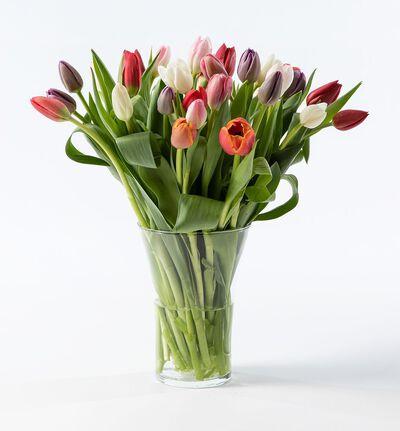 30 tulipaner i miks farger