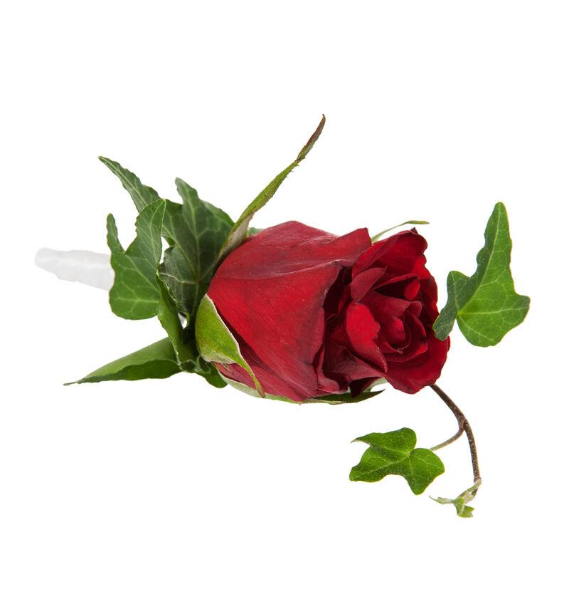Knapphullsblomst med rød rose image number null