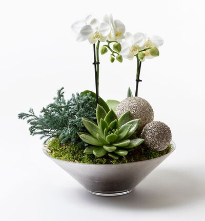 Hvit orkidè i glassfat
