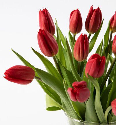 30 røde tulipaner