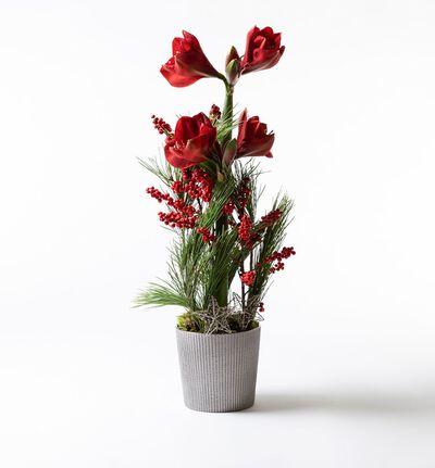 Rød amaryllisdekorasjon