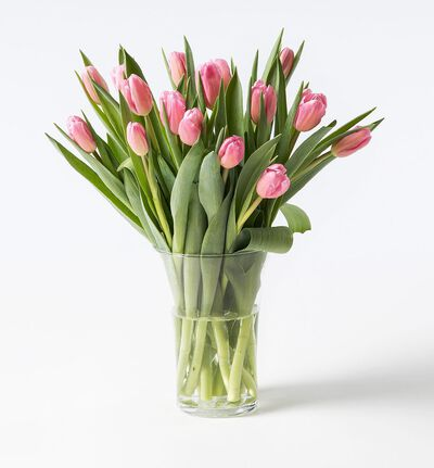 15 rosa tulipaner