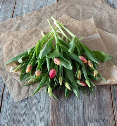 Tulipaner i varm fargemiks