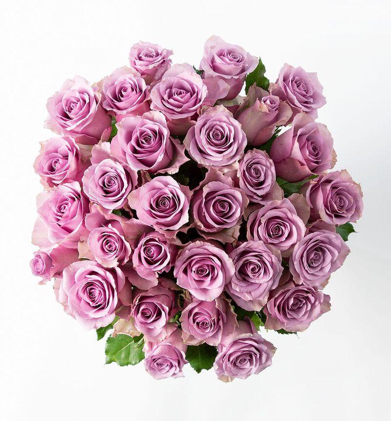 30 lilla roser image number null