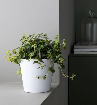 Liten lettstelt plantepakke