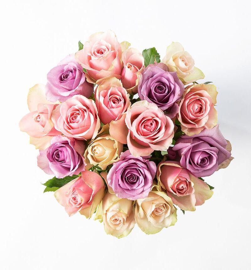 15 Fairtrade roser i rosa og lilla image number null