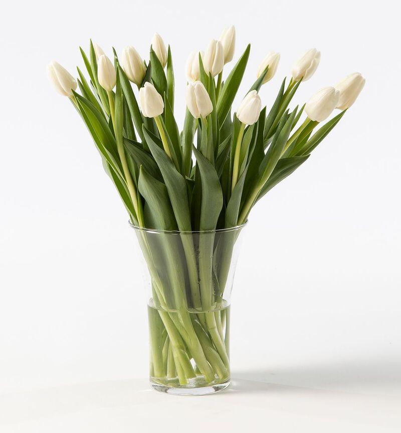 15 hvite tulipaner image number null