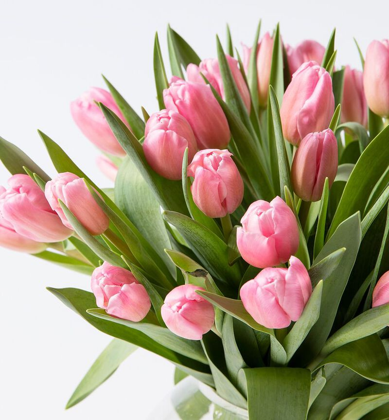 30 rosa tulipaner image number null