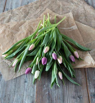 Tulipaner i kald fargemiks