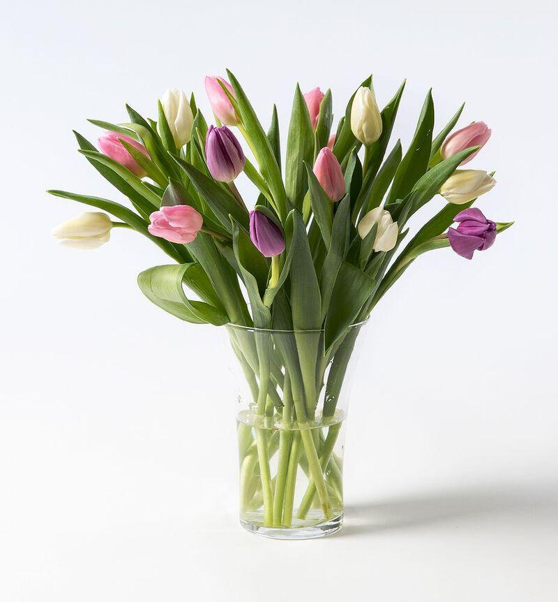 15 tulipaner i kalde miks farger image number null