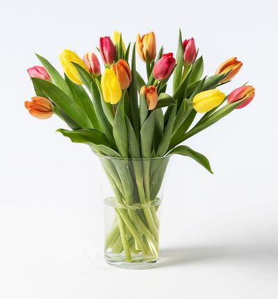 15 tulipaner i varme miks farger