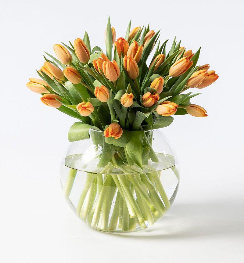 30 oransje tulipaner image number null
