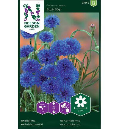 Frø kornblomst blå