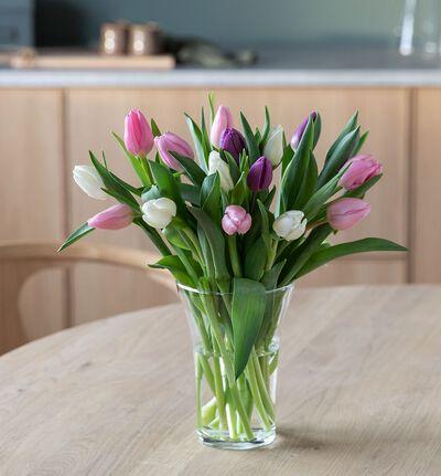 15 tulipaner i kalde miks farger