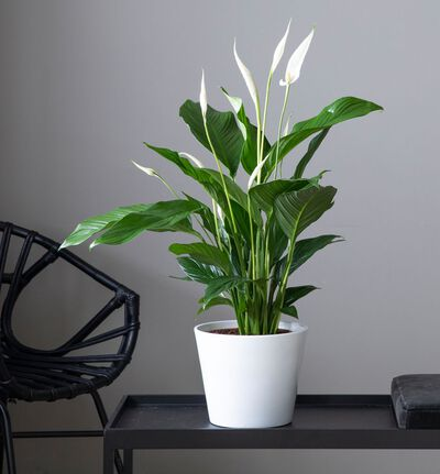 Medium lettstelt plantepakke