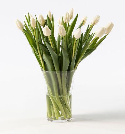 15 hvite tulipaner