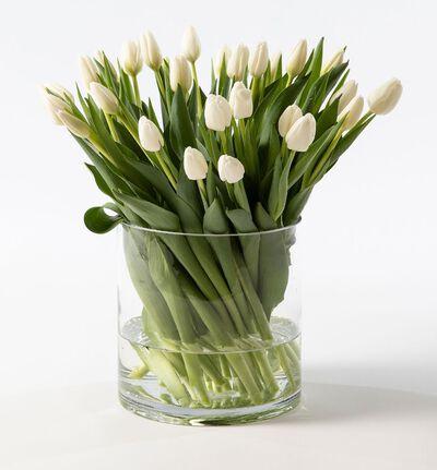 30 hvite tulipaner
