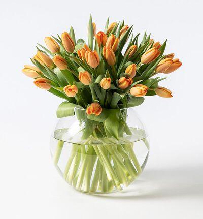 30 oransje tulipaner
