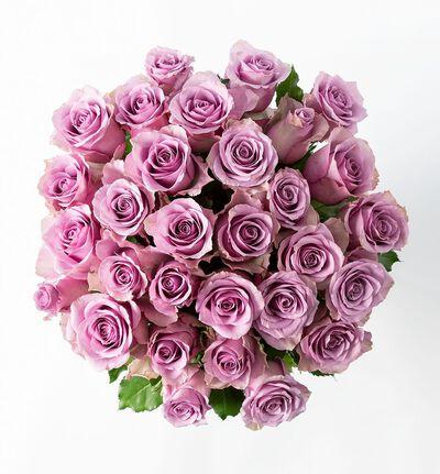 30 lilla Fairtrade roser