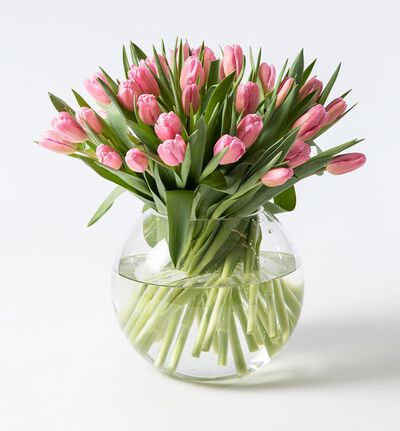 30 rosa tulipaner