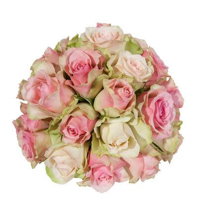 Rosa rosekule
