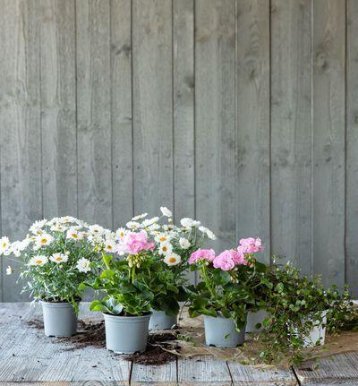 Vårpakke i rosa og hvitt