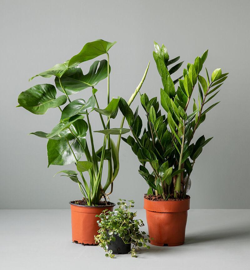 Liten lettstelt plantepakke image number null