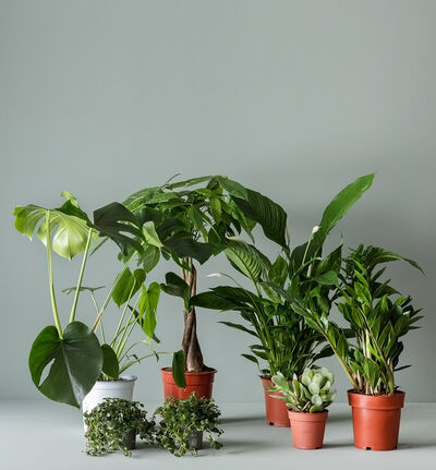 Stor lettstelt plantepakke